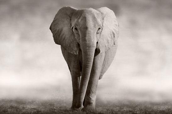 Elefant - djurvänlig turism