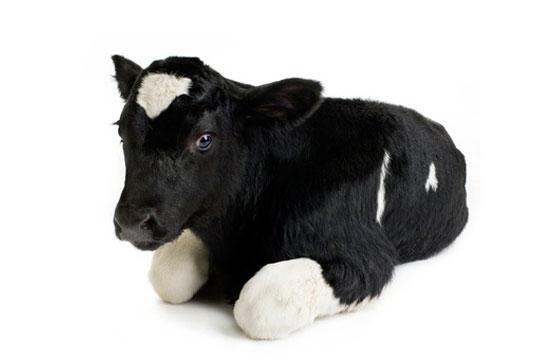 Mjölk och mjölkprodukter den stora myten