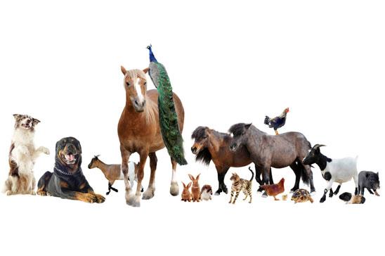 Att äta djur är enbart egoistiskt och fullständigt fel
