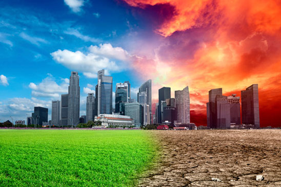 Djurindustrin har stor del i den globala uppvärmning