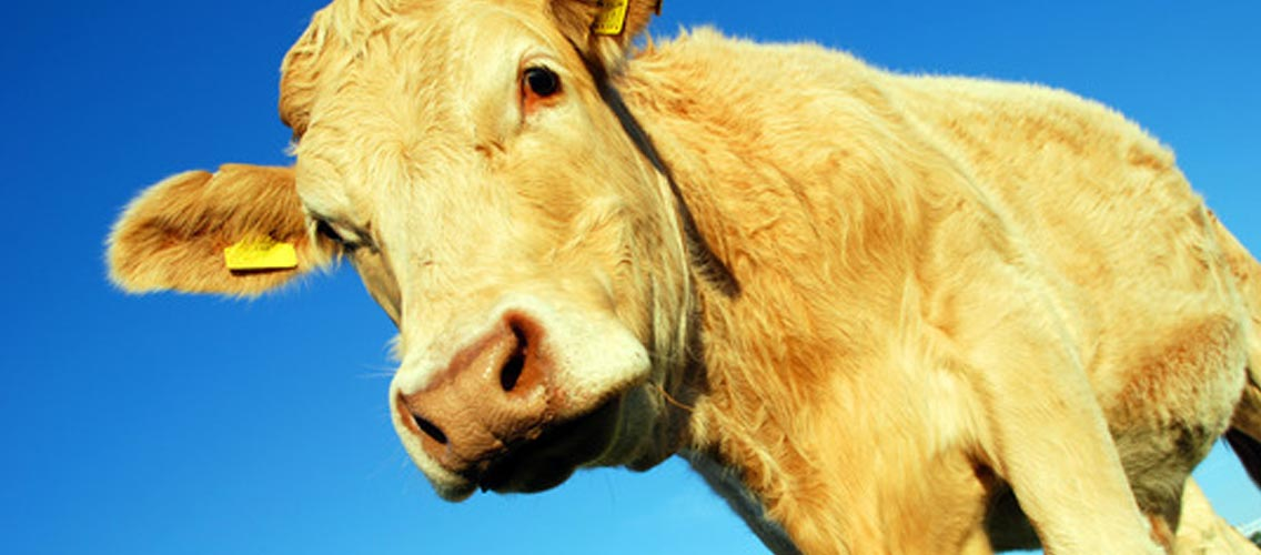 Veganism är en etisk övertygelse inte en kosthållning