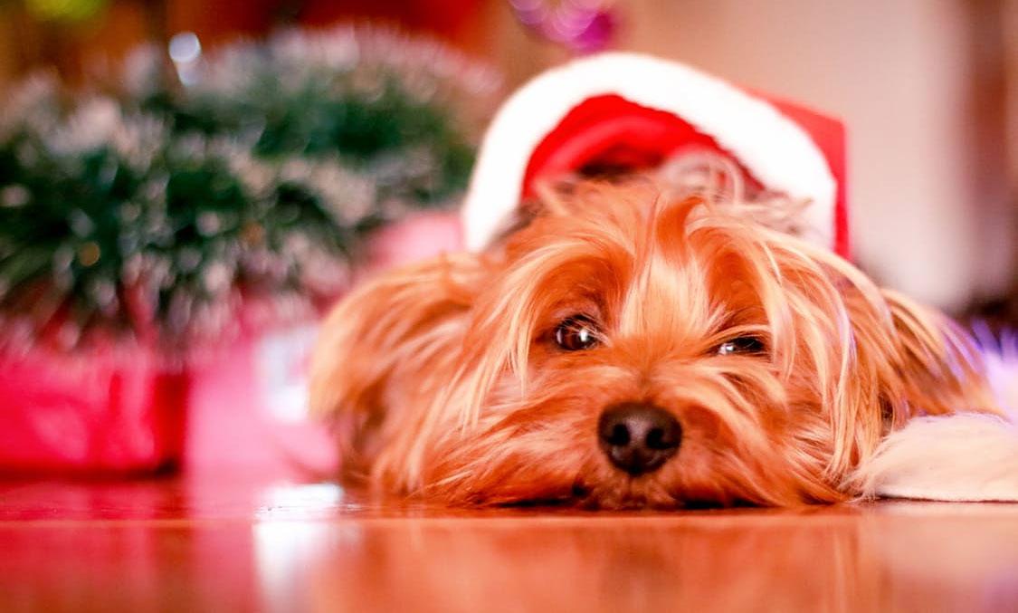 En givmild jul